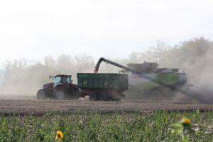 Aug. 2011: Getreideernte