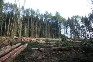 Aug. 2011: Holzernte