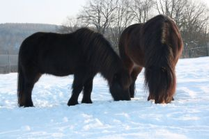 Feb. 2013: Pferde