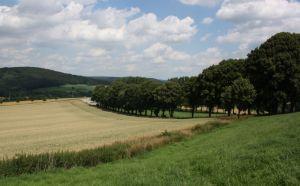 Lindenallee 2011